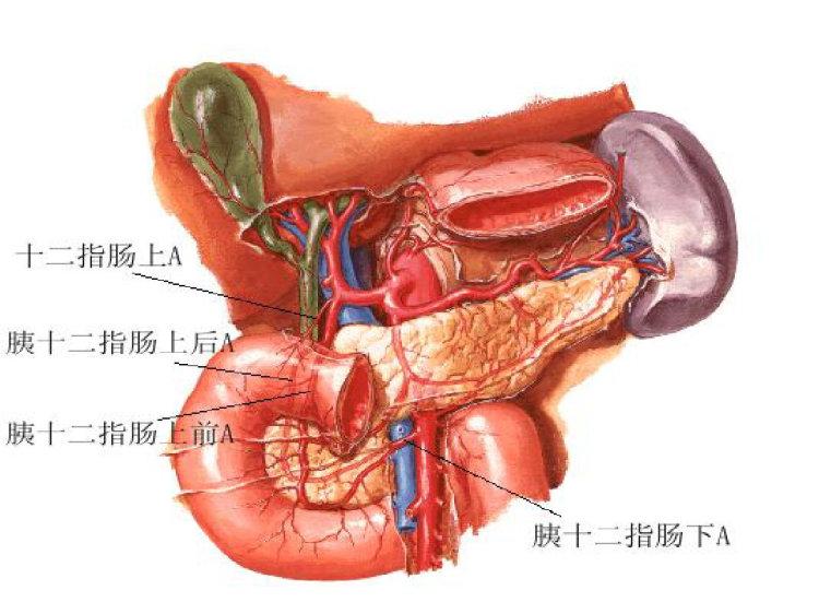 十二指肠淤积症PPT