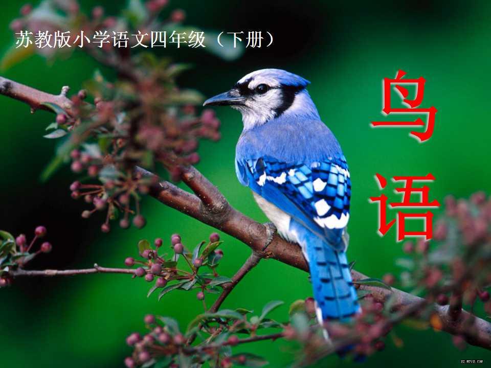 《鸟语》PPT课件3