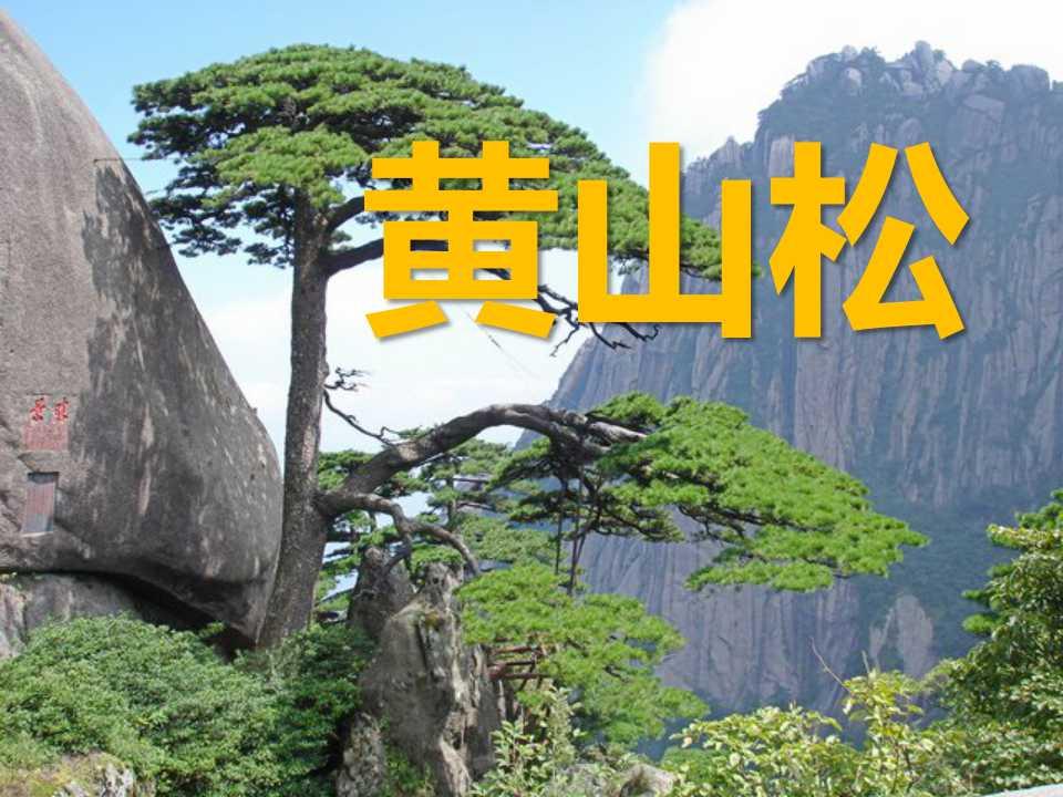 /kejian/yuwen/13712.html