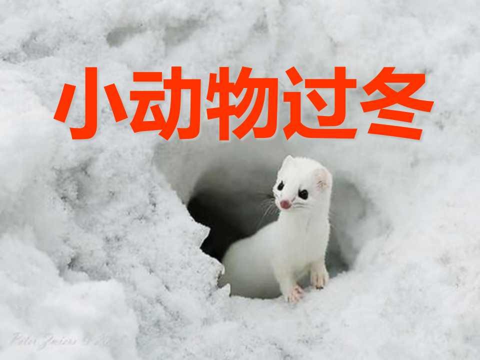 《小动物过冬》PPT课件4