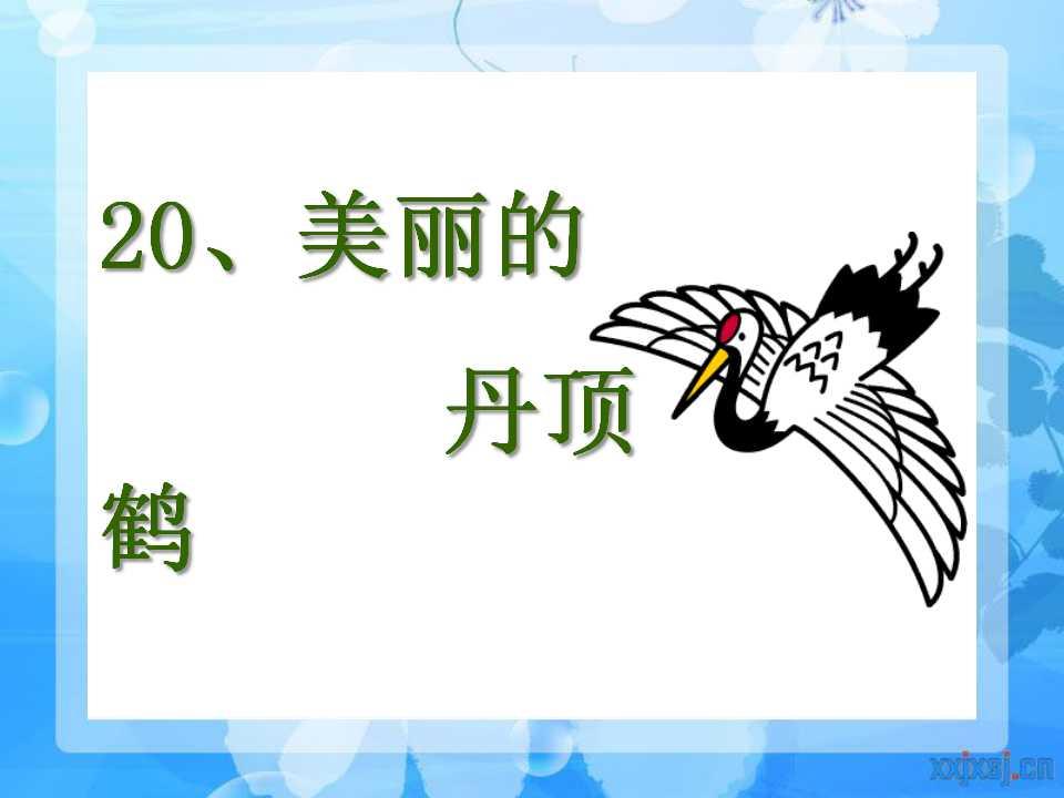 《美丽的丹顶鹤》PPT课件4