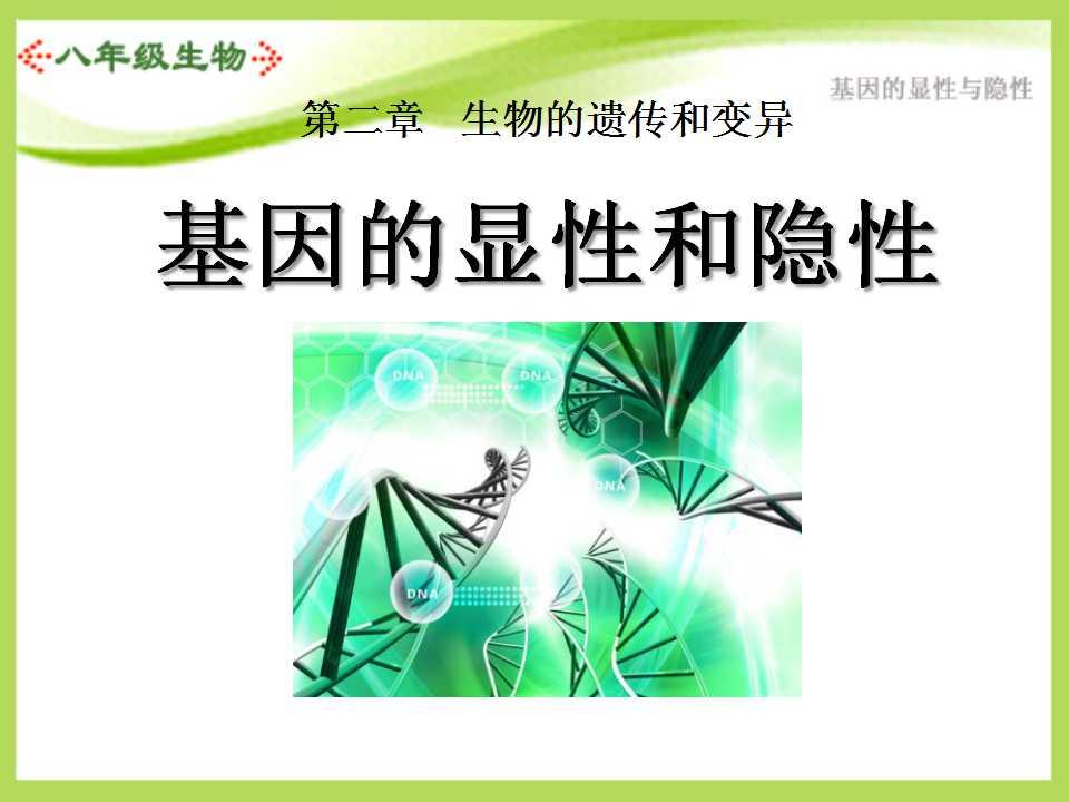 《基因的显性和隐性》生物的遗传和变异PPT课件2