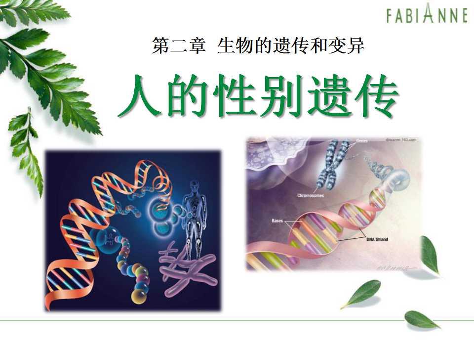 《人的性别遗传》生物的遗传和变异PPT课件4