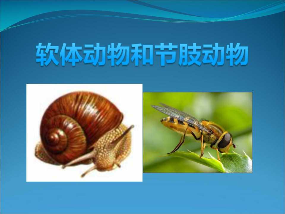 《软体动物和节肢动物》动物的主要类群PPT课件