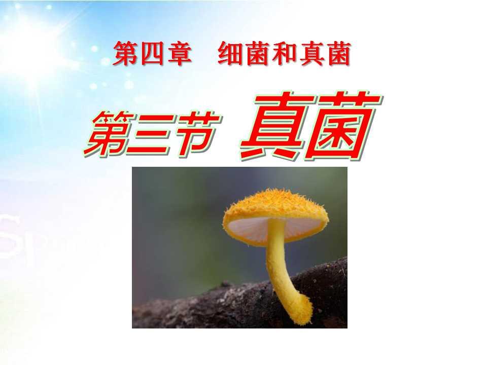 《真菌》细菌和真菌PPT课件4