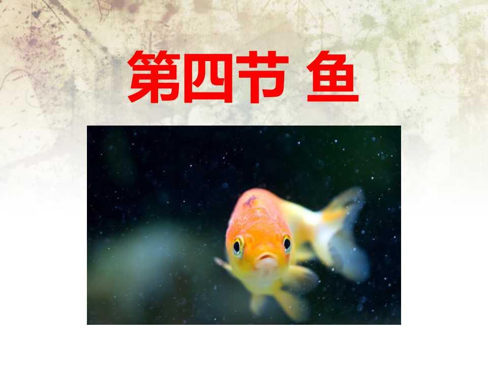 /kejian/shengwu/6922.html