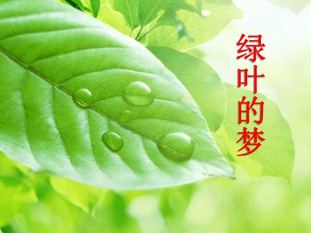 《绿叶的梦》PPT课件5