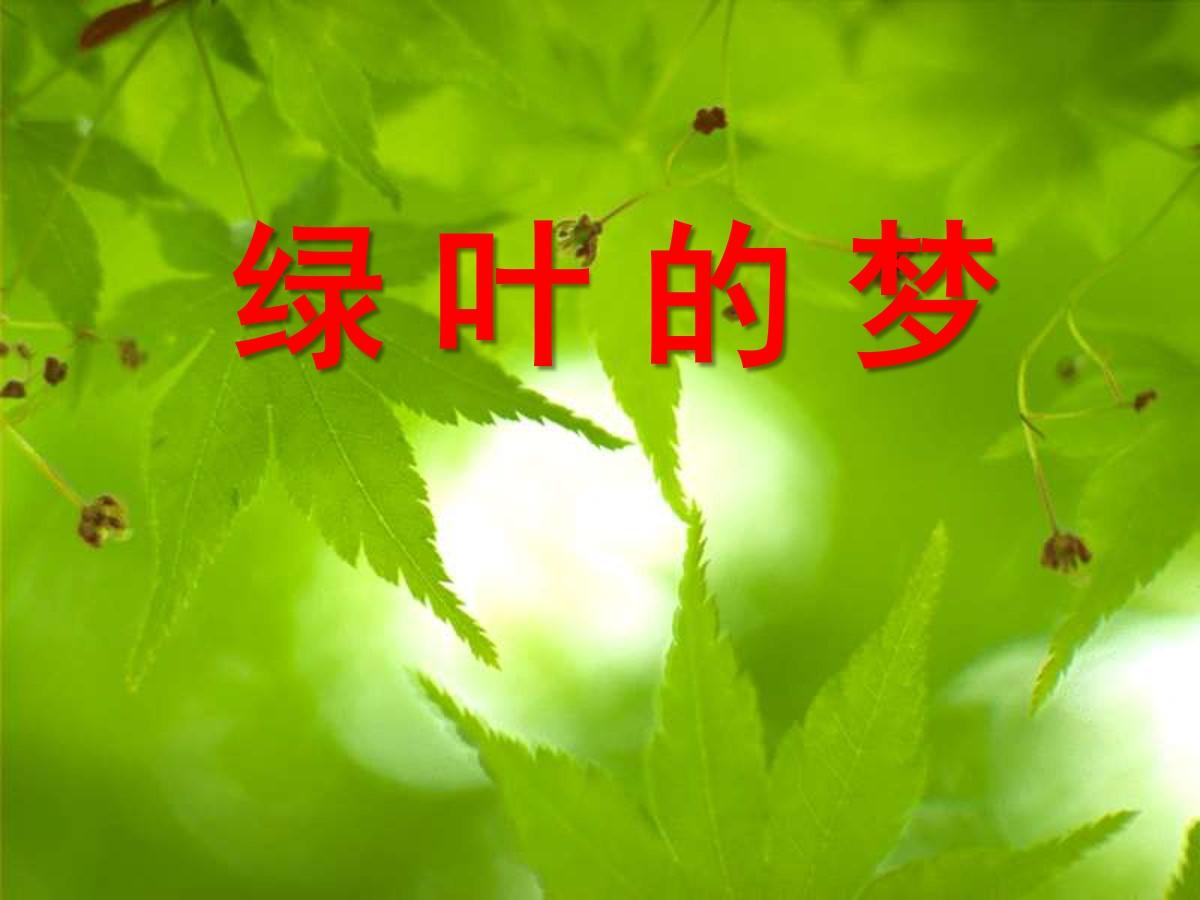 《绿叶的梦》PPT课件6