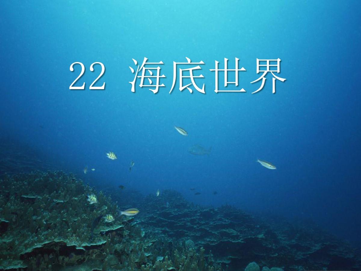《海底世界》PPT课件7