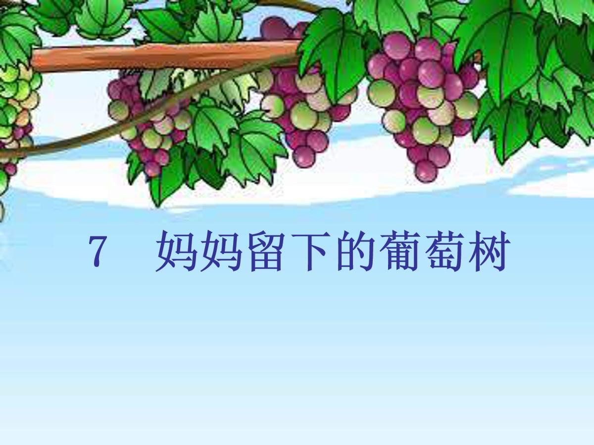 《妈妈留下的葡萄树》PPT课件