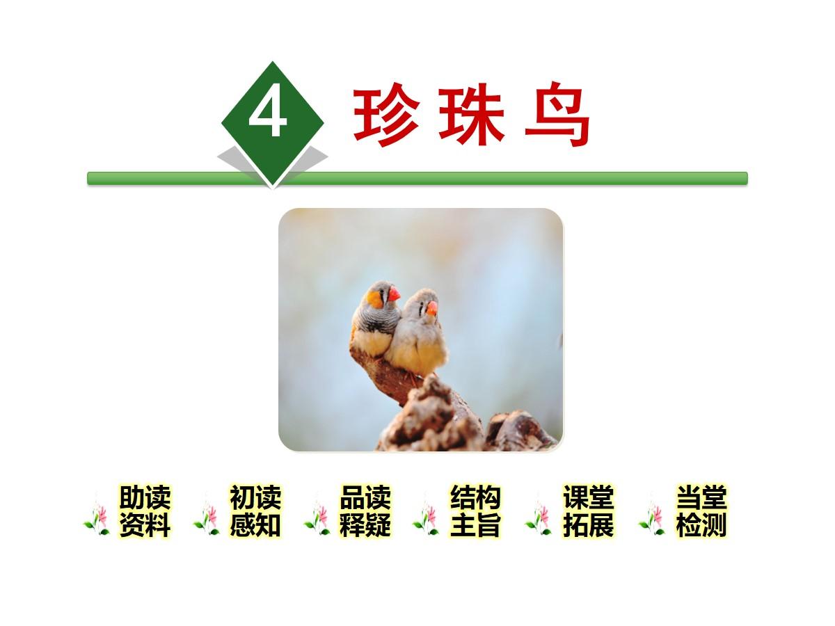 《珍珠鸟》PPT