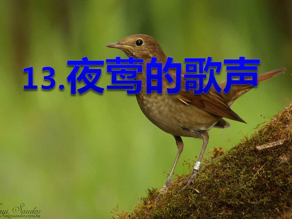 《夜莺的歌声》PPT课件3