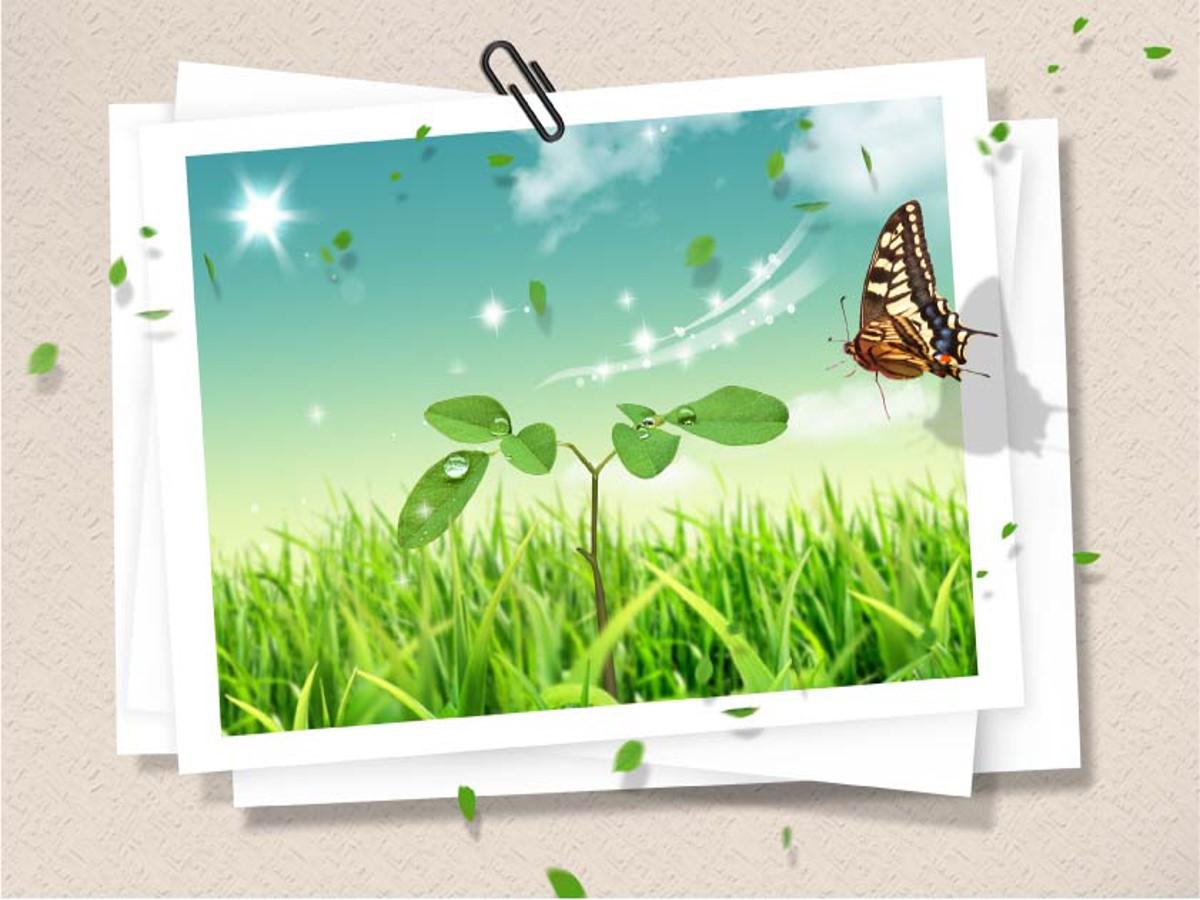 蝴蝶绿草幻灯片背景模板