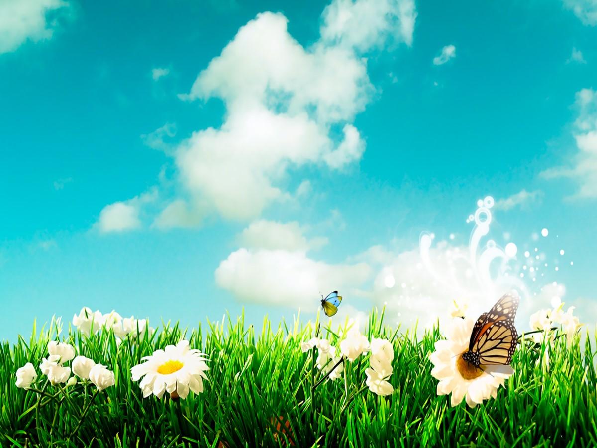 草地蝴蝶背景自然风景PPT模板