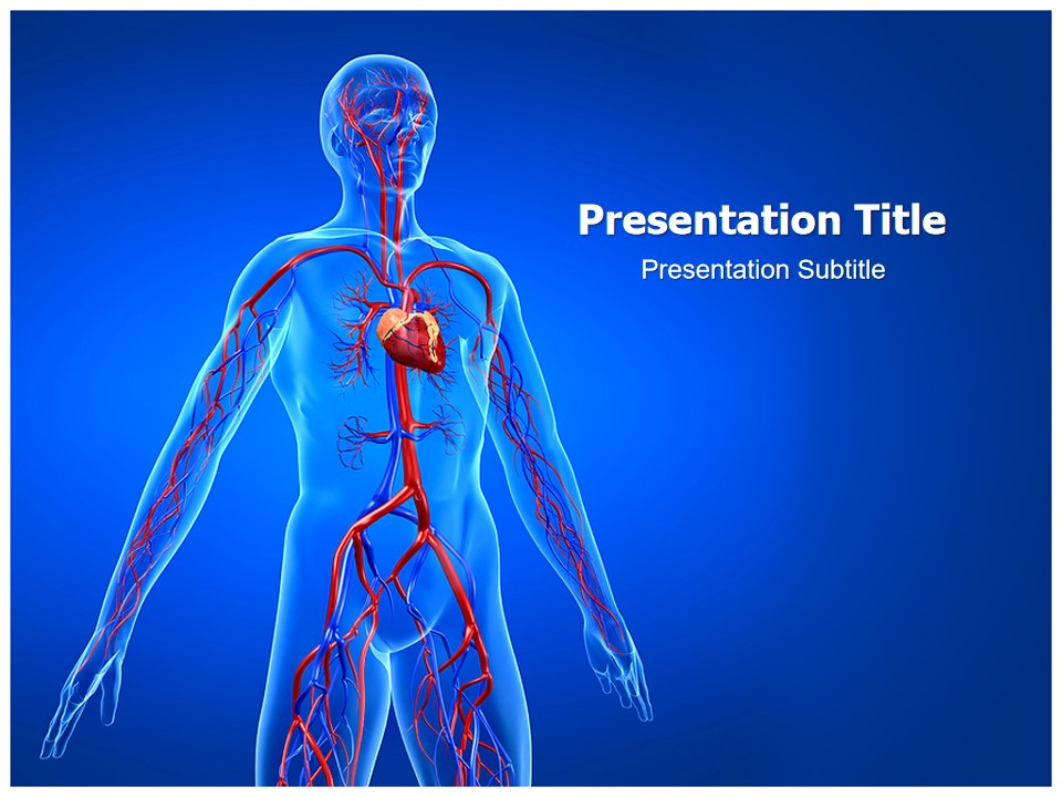 人体动脉分布PPT模板