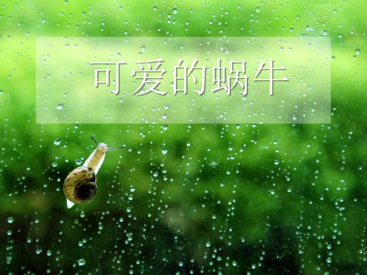 可爱蜗牛动物PPT模板