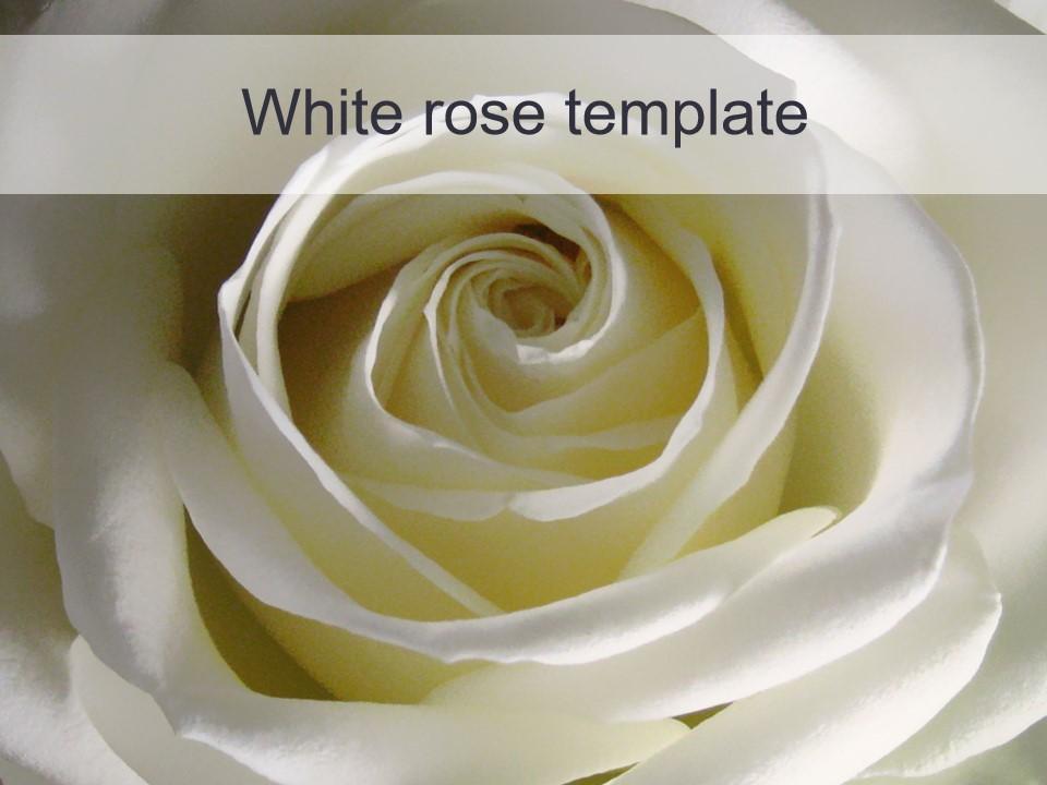 白玫瑰PPT模板