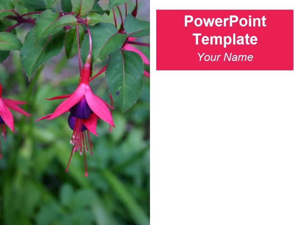 紫红色PPT模板