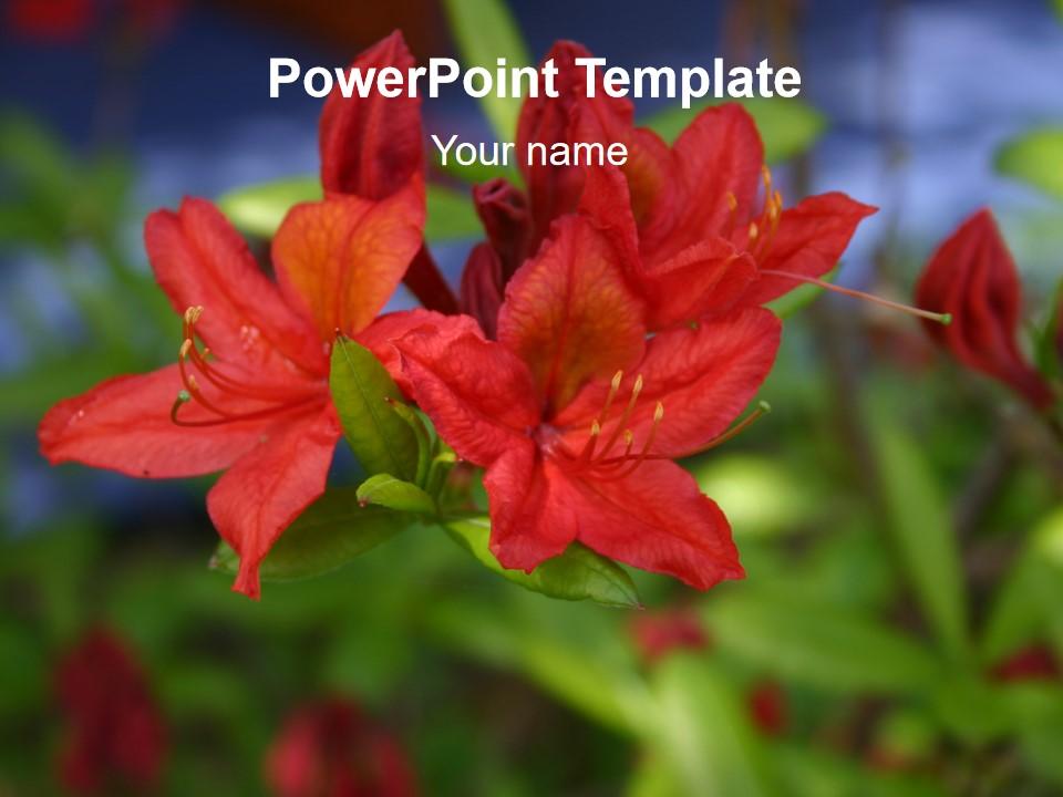 红花PPT模板