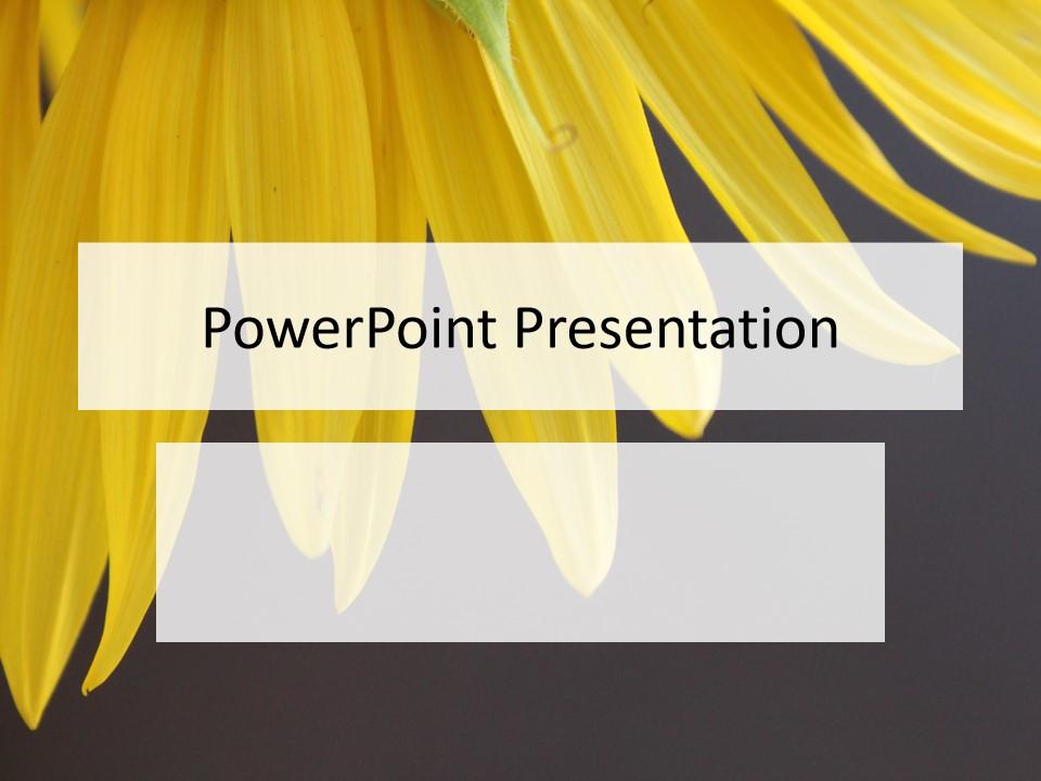 黄色花瓣PPT模板